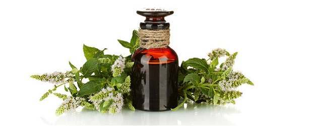 What Need To Know About Tea Tree Oil & Hair